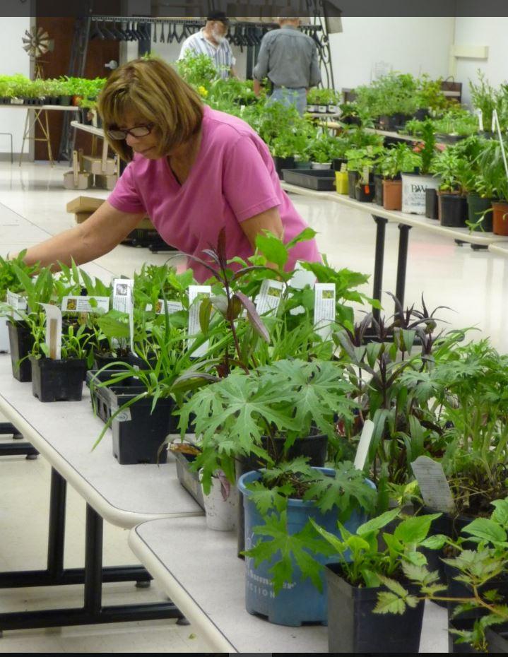 Plant sale 2 (2)