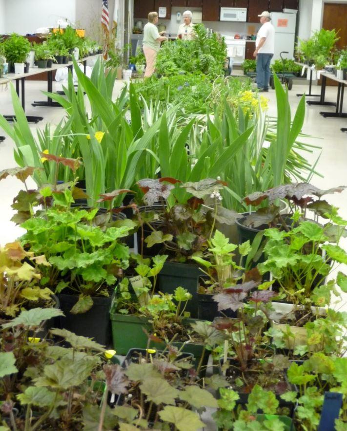 Plant sale (2)