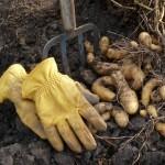 Gardening for Gold